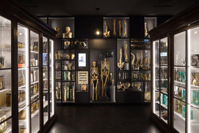 Drīzumā durvis apmeklētājiem vērs RSU Anatomijas muzejs