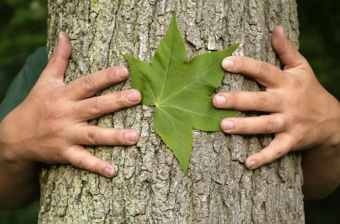 Ekoskolu programmai Latvijā reģistrējušās 168 izglītības iestādes